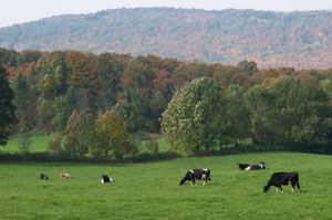 Westmoreland is historically an agricultural town, with much arable farmland.