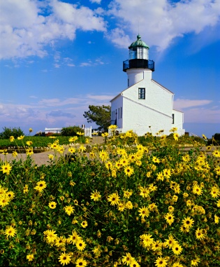 Old-Point-Loma-Lighthouse-Flowers.jpg