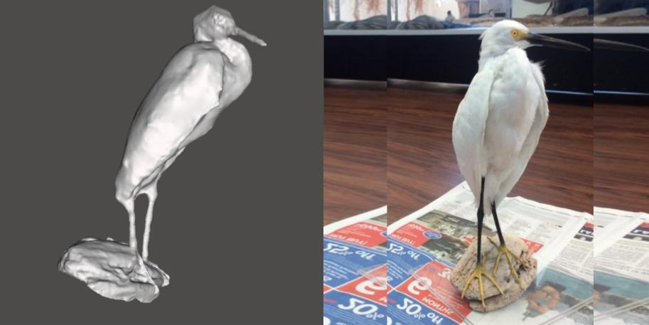 Snowy Egret.png