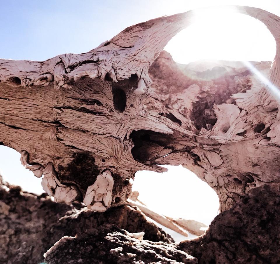Sunlight through Skull