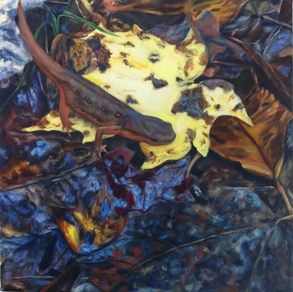 Eastern Newt and Leaves