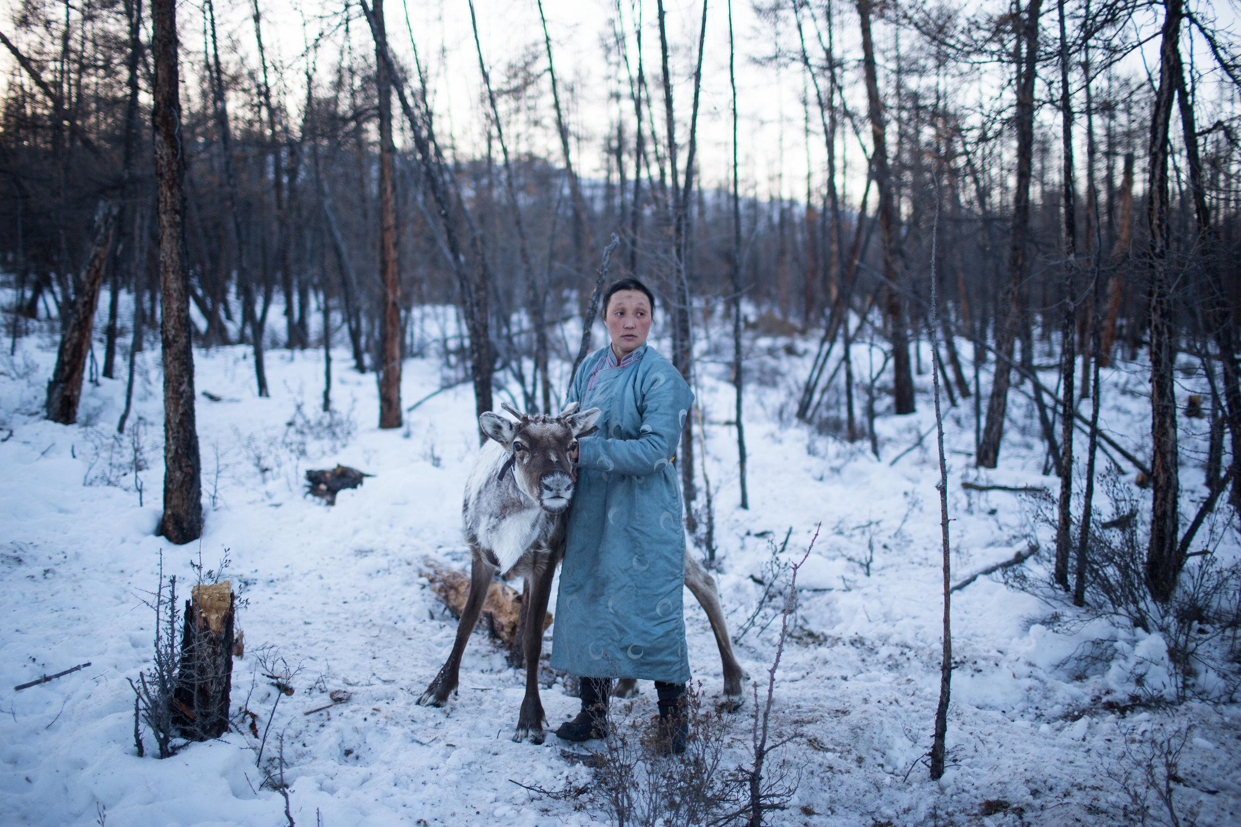 A Dukha woman releases reindeer to graze at dusk near Tsagaannuur, Mongolia. (Credit: Taylor Weidman)