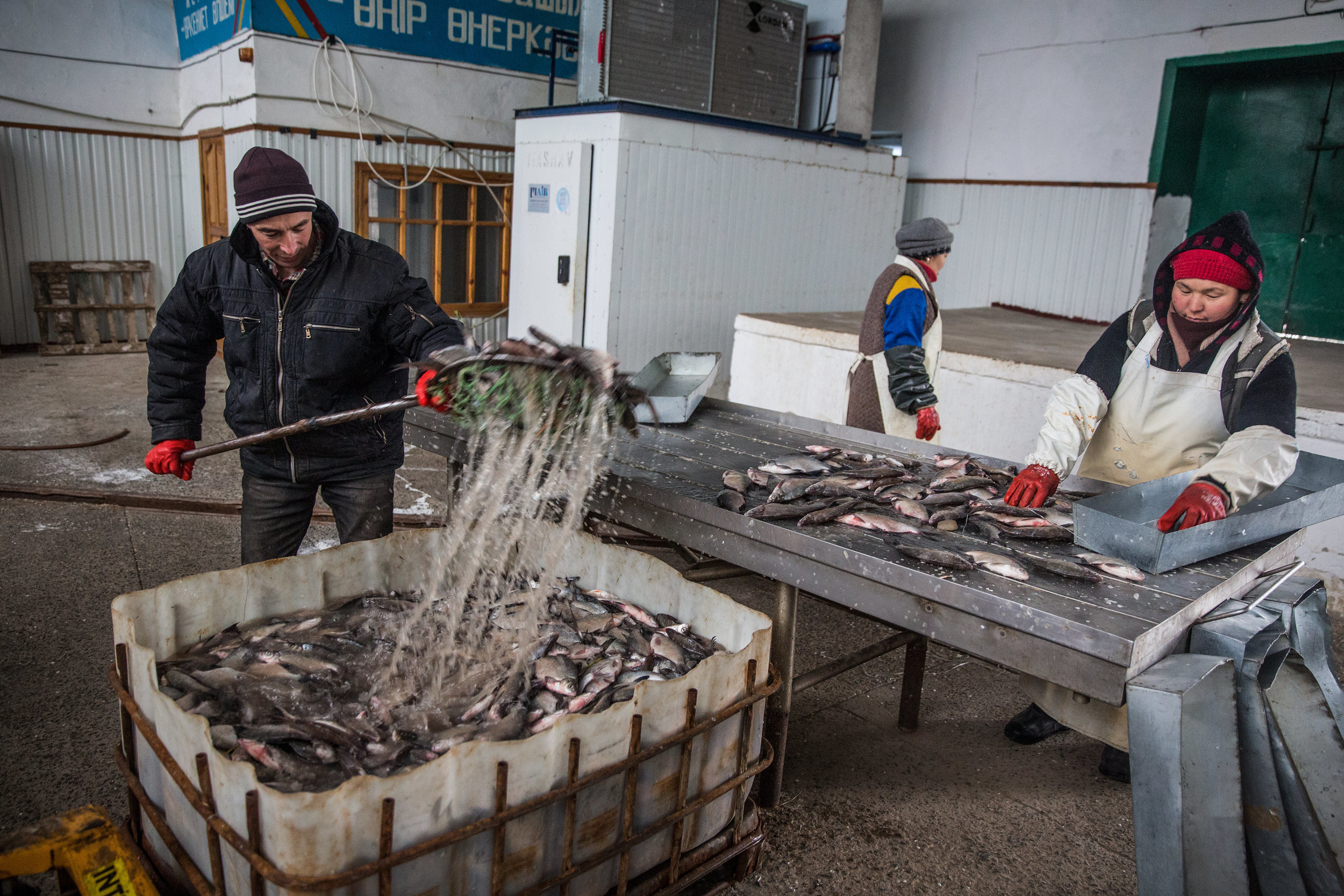 Workers process fish at a plant in Aralsk, Kazakhstan. (Credit: Taylor Weidman)