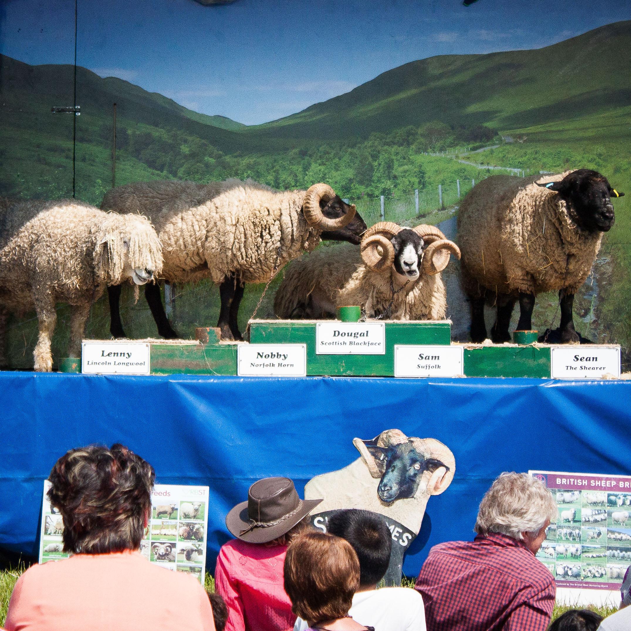 Wool Fair-2.jpg