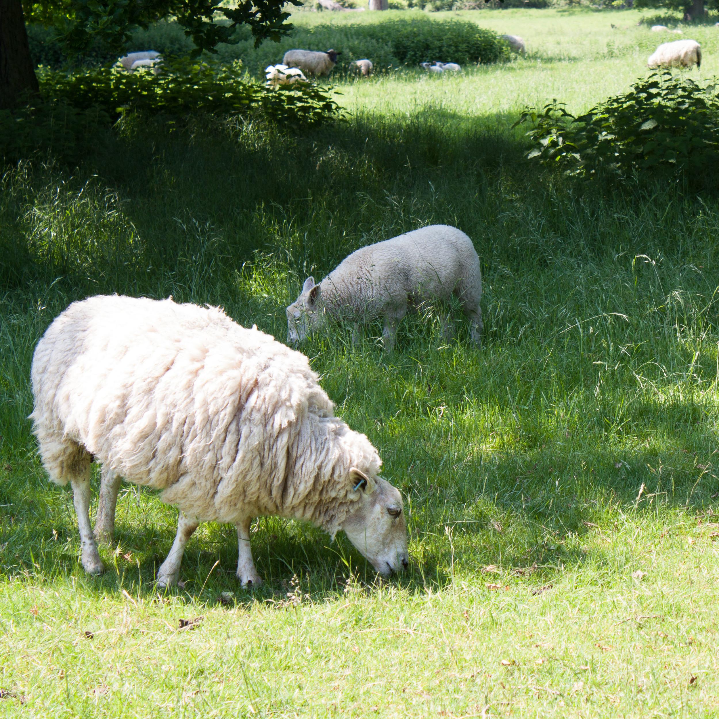 Wool Fair-6.jpg