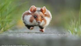the runaway.jpg