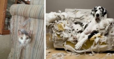 property destruction.jpg