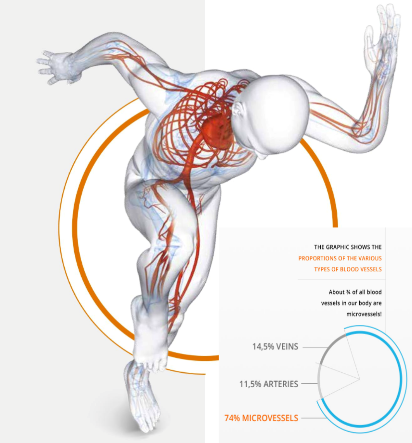 BEMER-circulatory-system-pic_with-graph.png