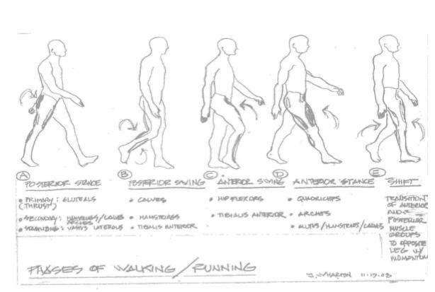 Phases of Walking by Jim Wharton
