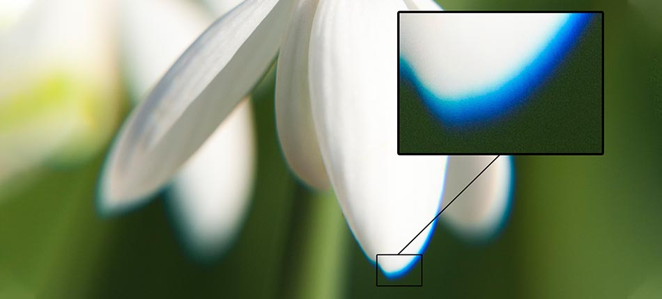 Chromatic Aberration - Near the edge of this flower pedal, the chromatic aberration is highly visible.