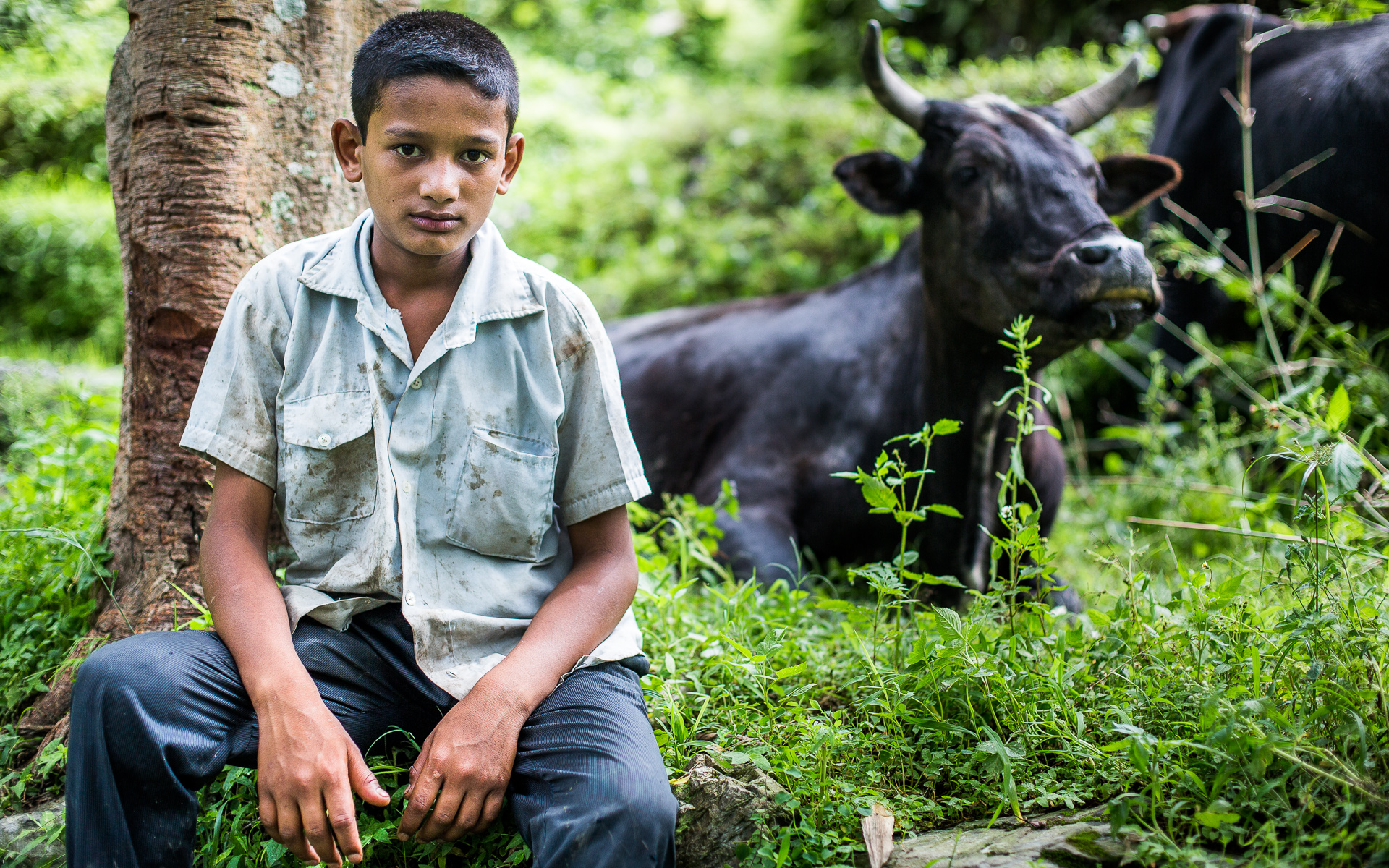 A boy proudly posing with his family's ox. This animal is considered very valuable because it can do an incredible amount of work in the fields. At the end of its working life, it will provide the family with a lot of meat too.