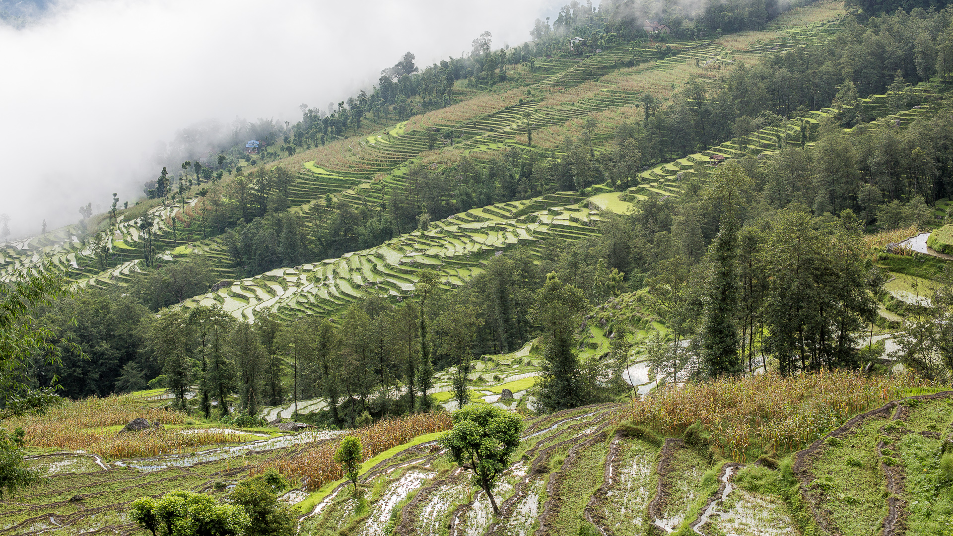 Morning view from Rohit's uncle's house. Morning mist is slowly moving up the mountainside after a night of heavy rain.