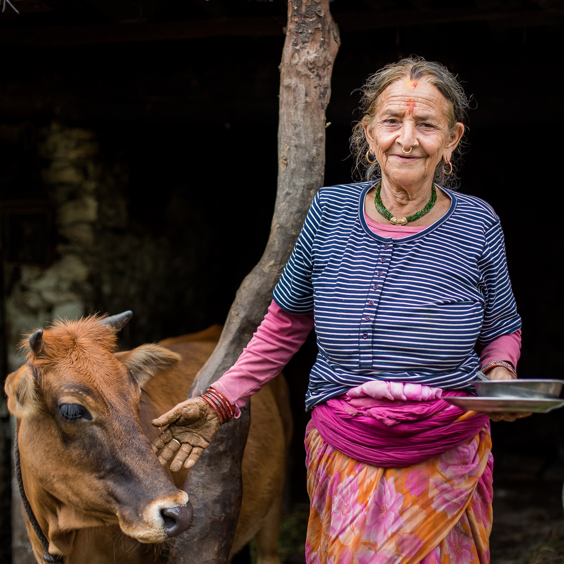 Grandmother of the family wanted to pose, wearing her new shirt, with her ox.