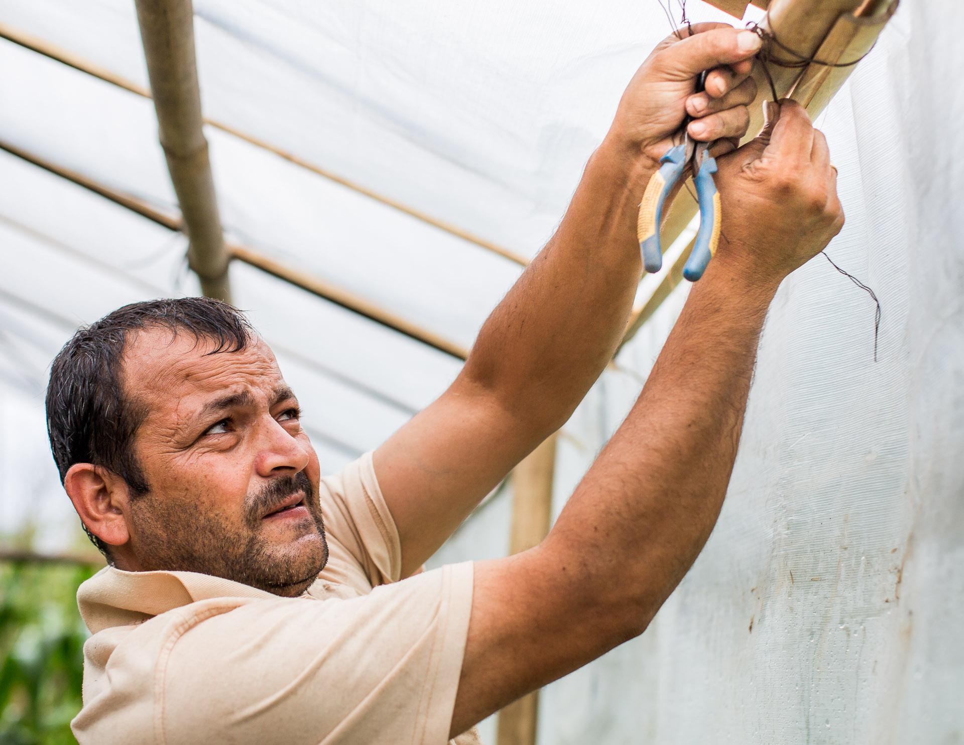 Domaraj tying bamboo together.