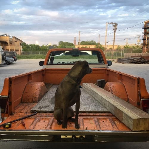 Shop Dog Steve McQueen sitting in our 1975 Chevy Silverado