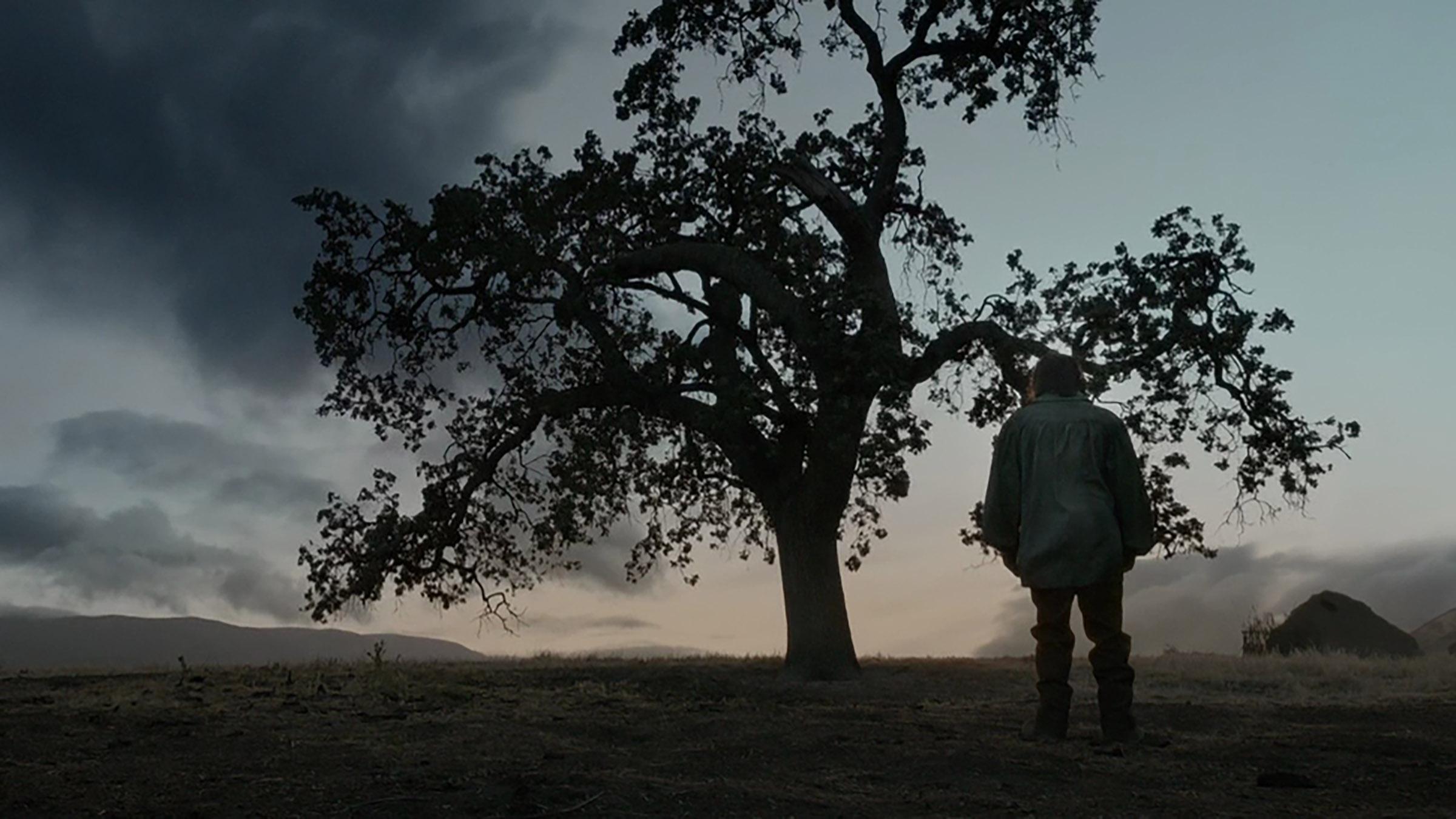 Still taken from The Revenant. Directed by Alejandro González Iñárritu. Cinematography by Emmanuel Lubezki.