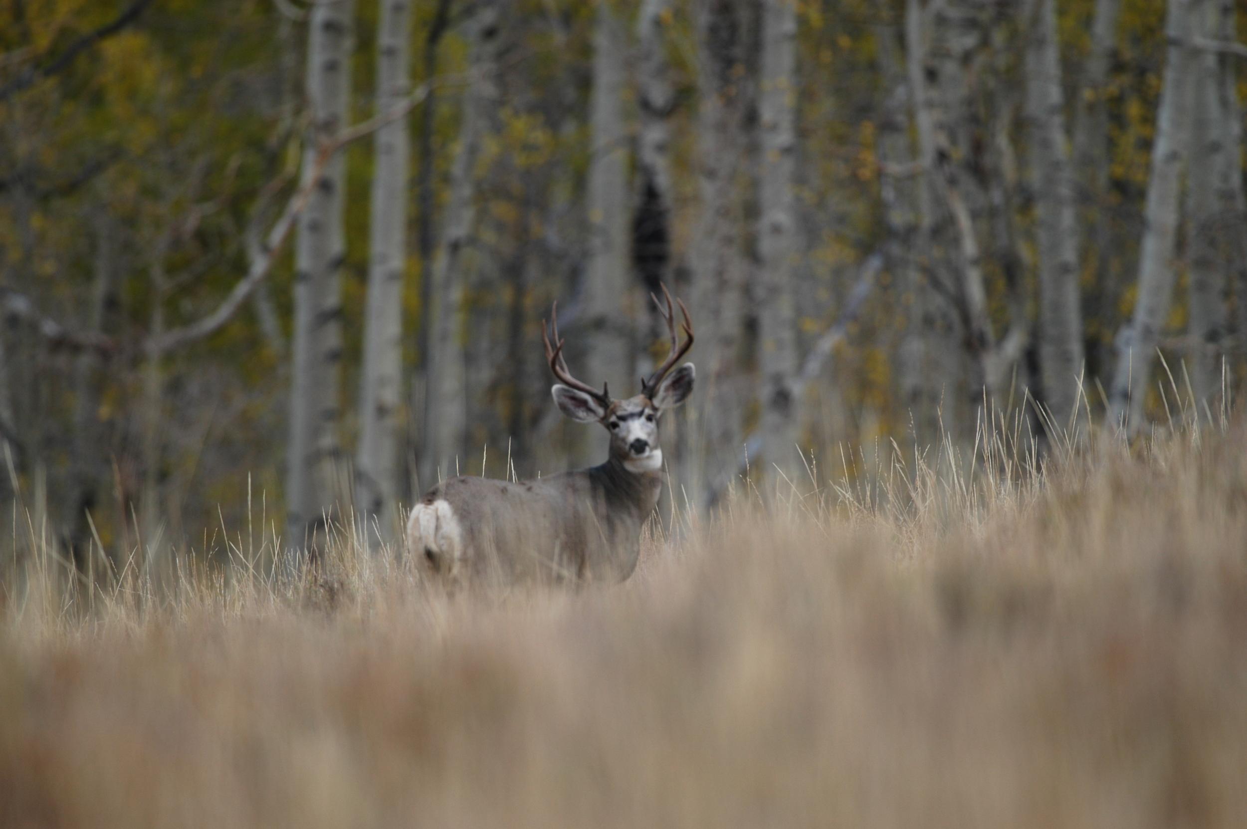 buck 09.jpg