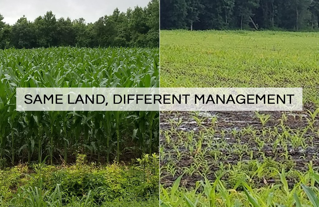A visualization of regenerative agriculture and no till vs traditional tilling. Image borrowed from  Joyce Farms
