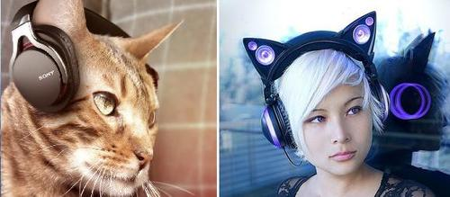 Headphones for your cat, not to be confused with cat headphones