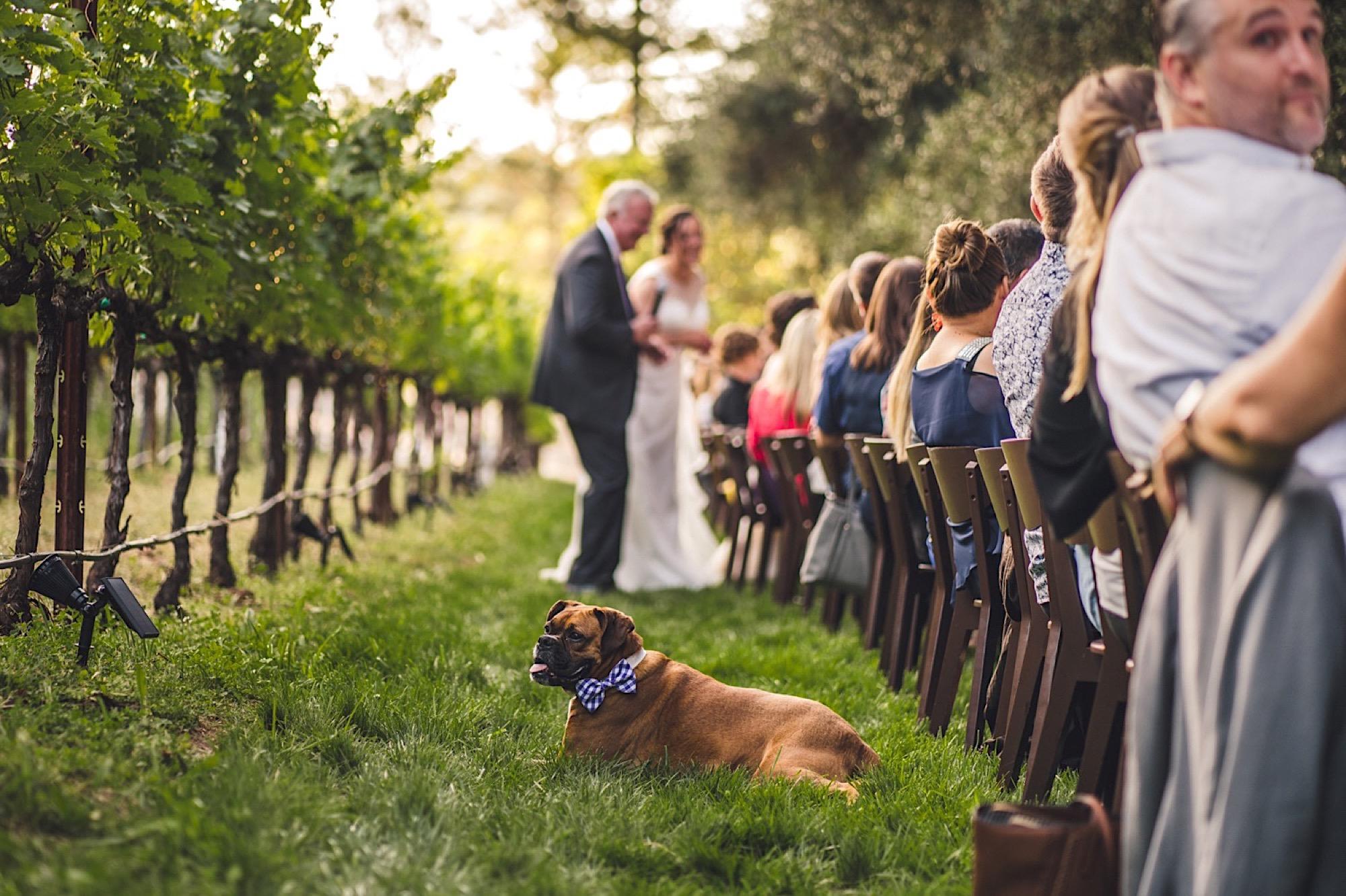 38_wedding_Taco.jpg