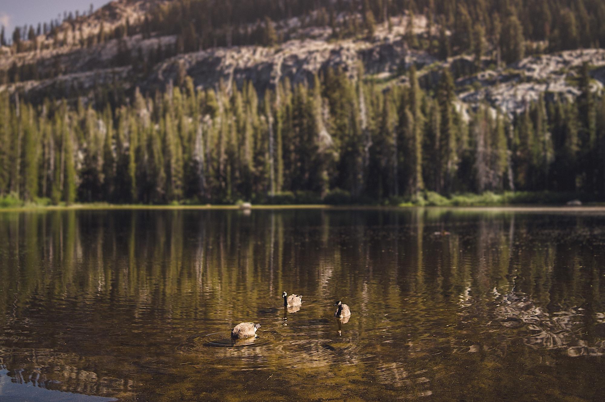 14_in_photographer_wedding_Tahoe_Lake.jpg