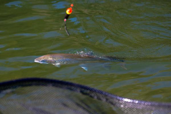 bogie_fishing_037.jpg