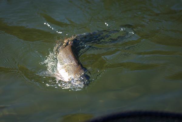 bogie_fishing_038.jpg