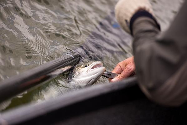 bogie_fishing_040.jpg