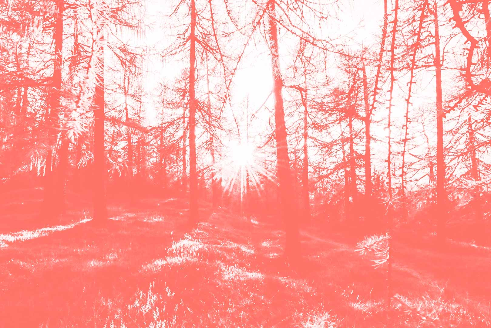 17122018-4Pantone16-1546-Foresta.jpg