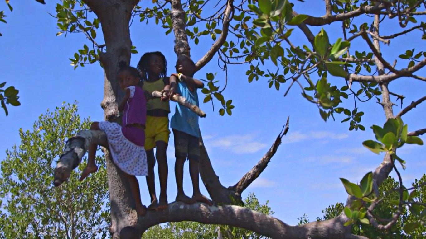 Hack Climate Madagascar Mangrove Trees 8.jpg