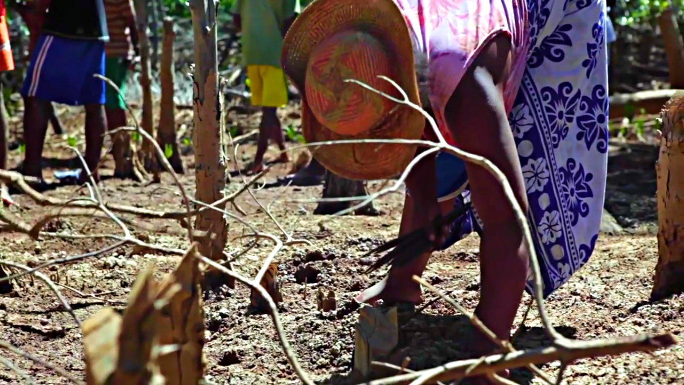 Hack Climate Madagascar Mangrove Trees 4.jpg