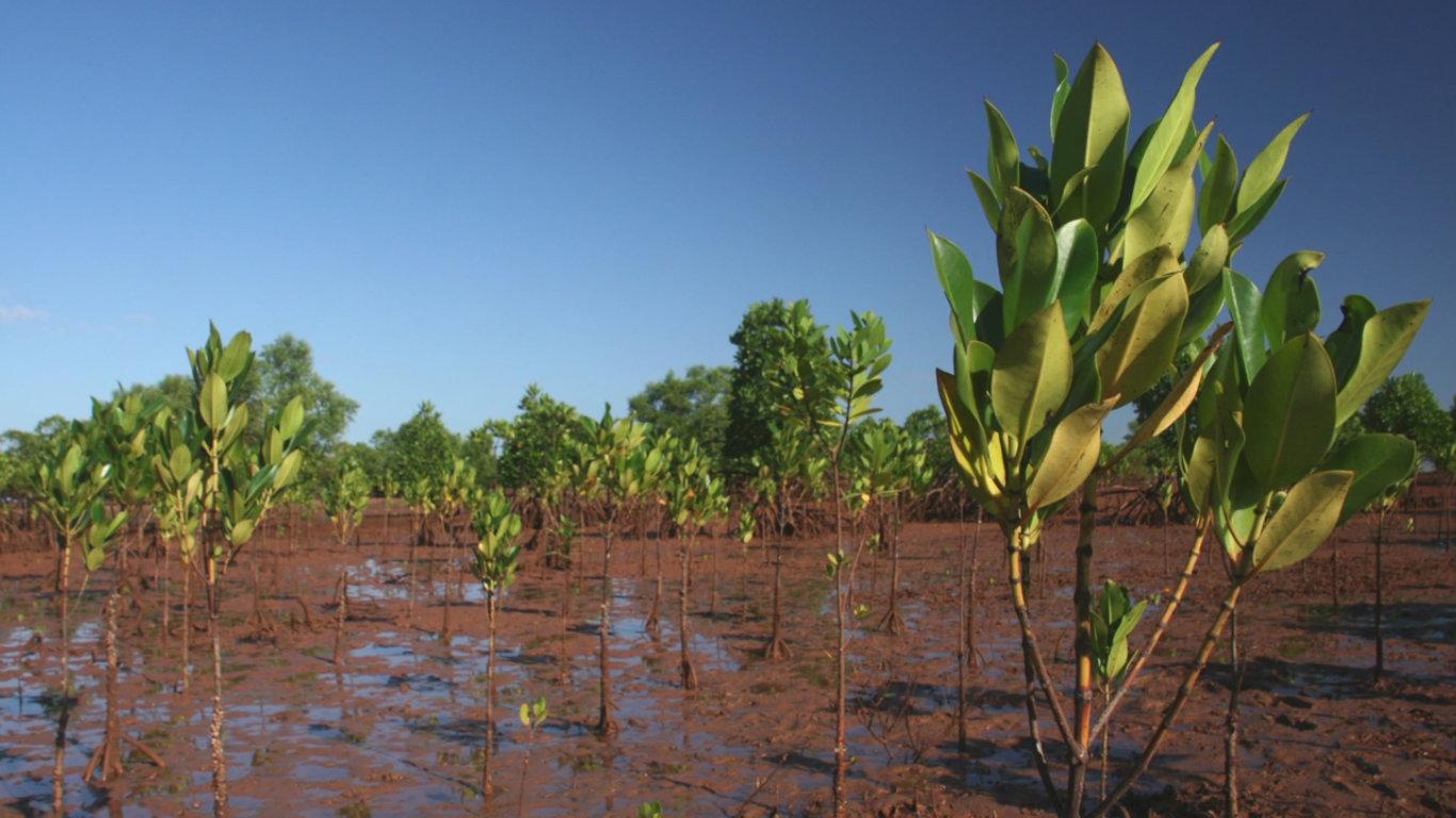 Hack Climate Madagascar Mangrove Trees 5.jpg