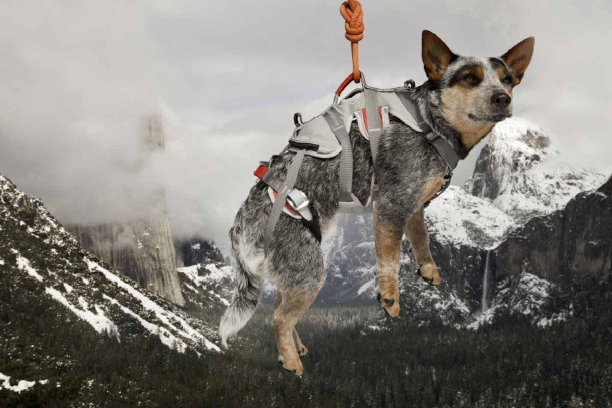 Meet Whisper Potter, the world's first BASE jumping dog