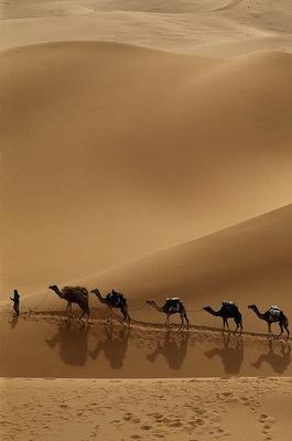 Exploring the Deserts of Dubai