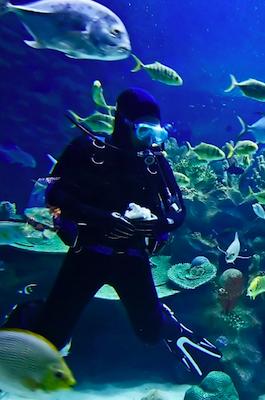 Travel Insurance for SCUBA Diving