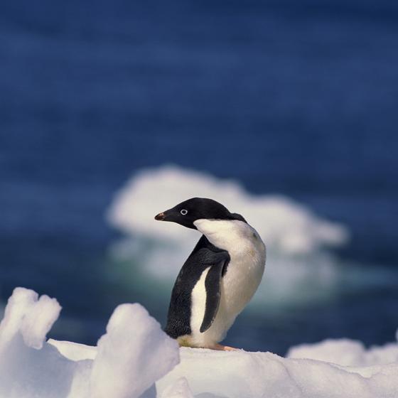 Ecotourism in Antarctica