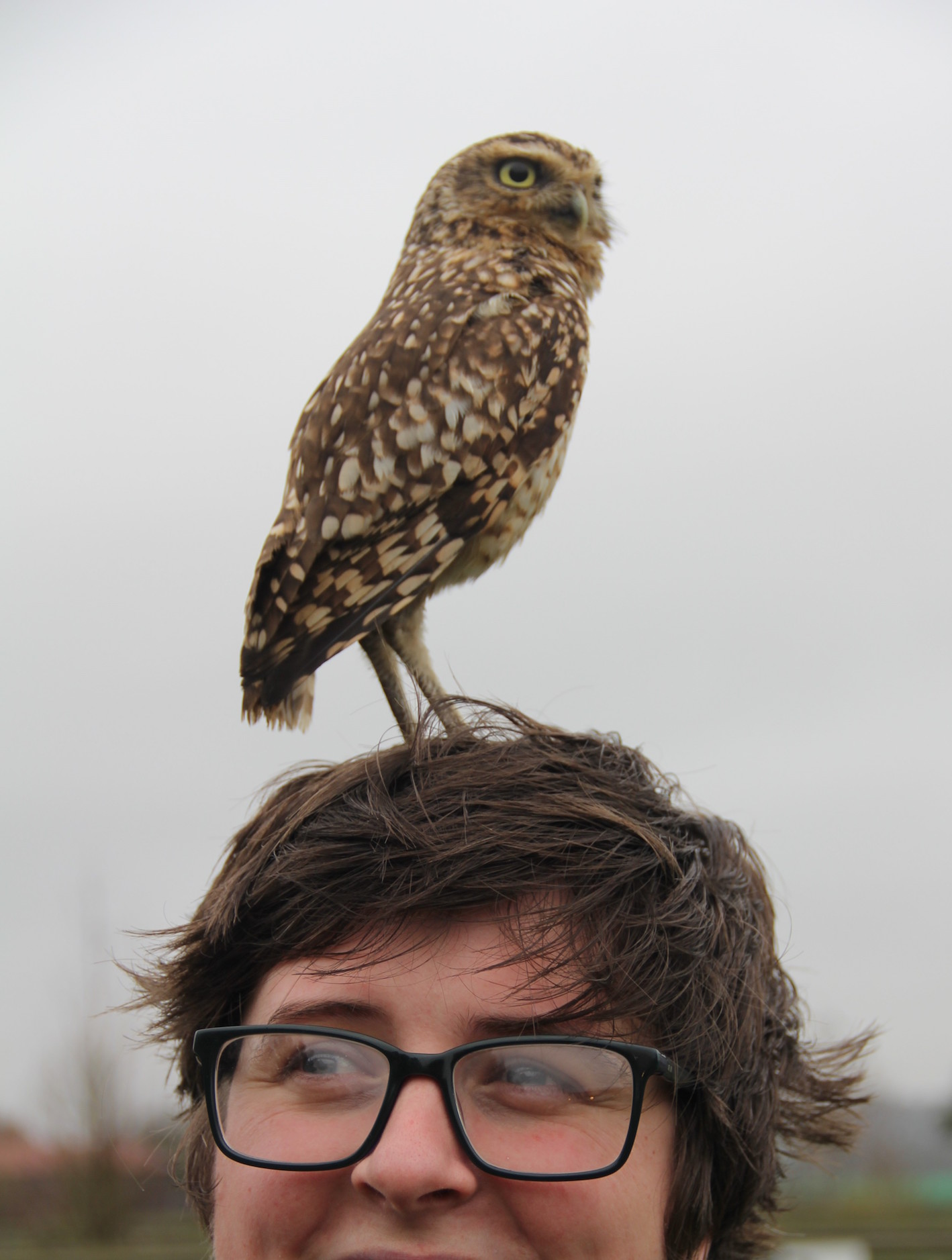 An owl (and Eley Williams)