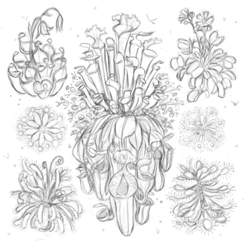 Ode to Meat Eating Plants sketch
