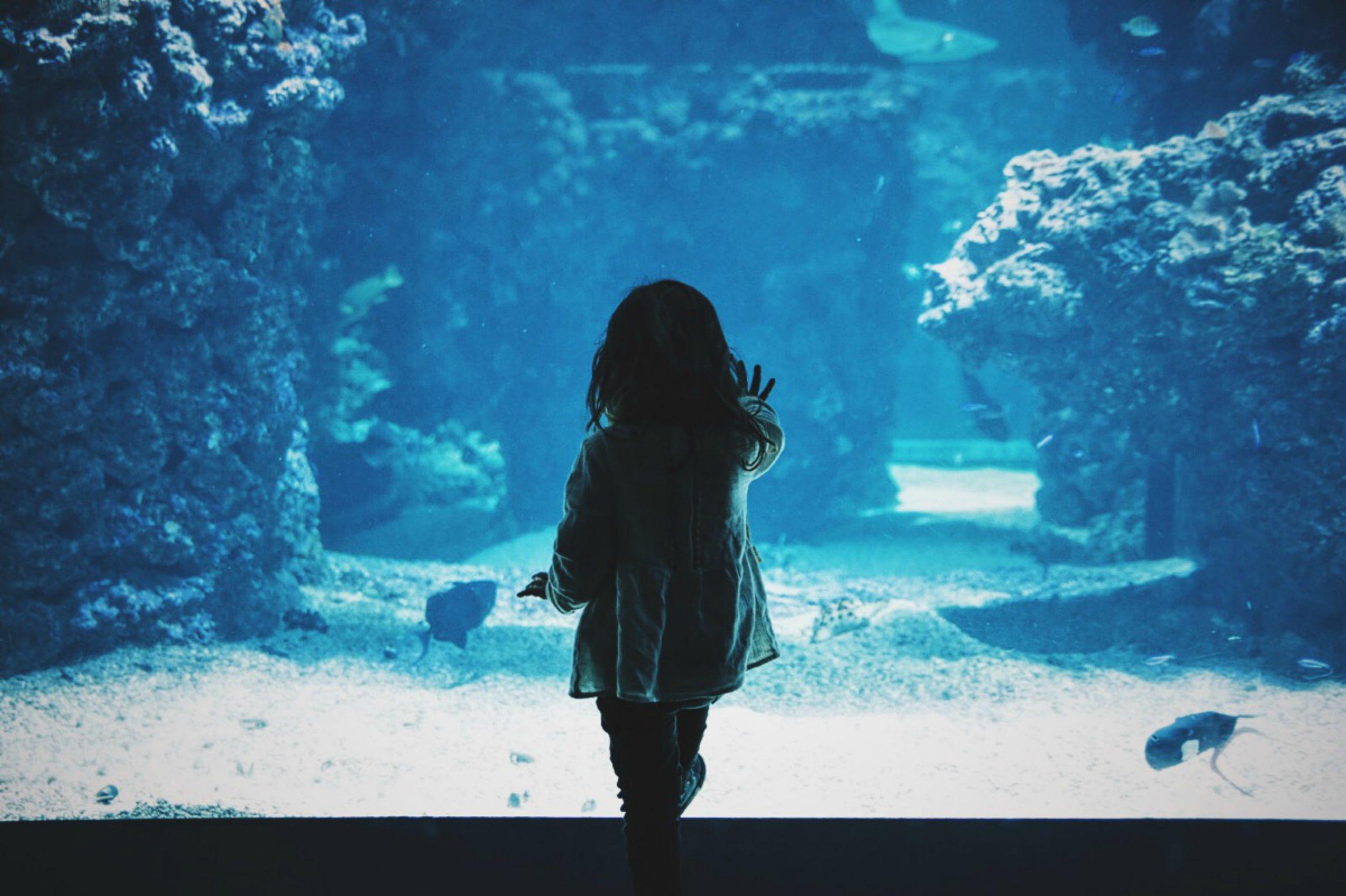"""Toddler girl touching glass tank."" Photo by  Caroline Hernandez  on  Unsplash"