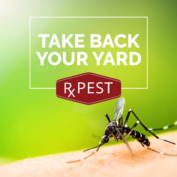 Take Back Your Yard.jpg