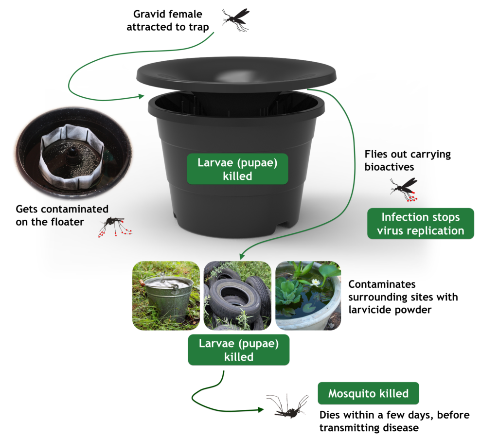 In2care Product Disrupting mosquito lifecycle