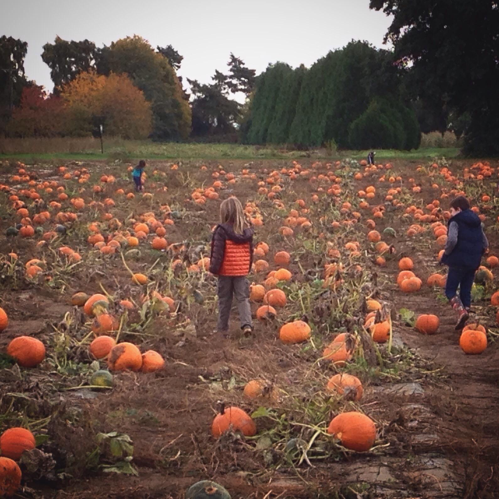 Choosing the perfect pumpkin (gah - all that ORANGE...)