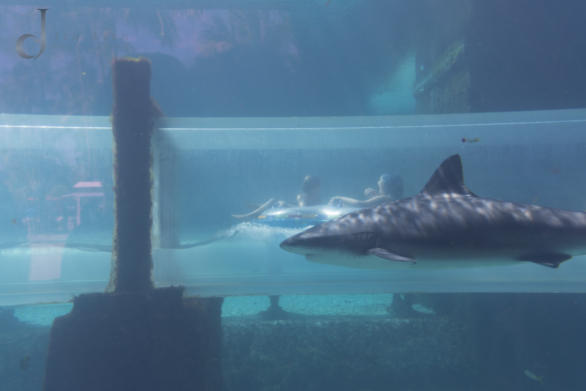 Waterslide through a shark tank! That's my daughter in there.