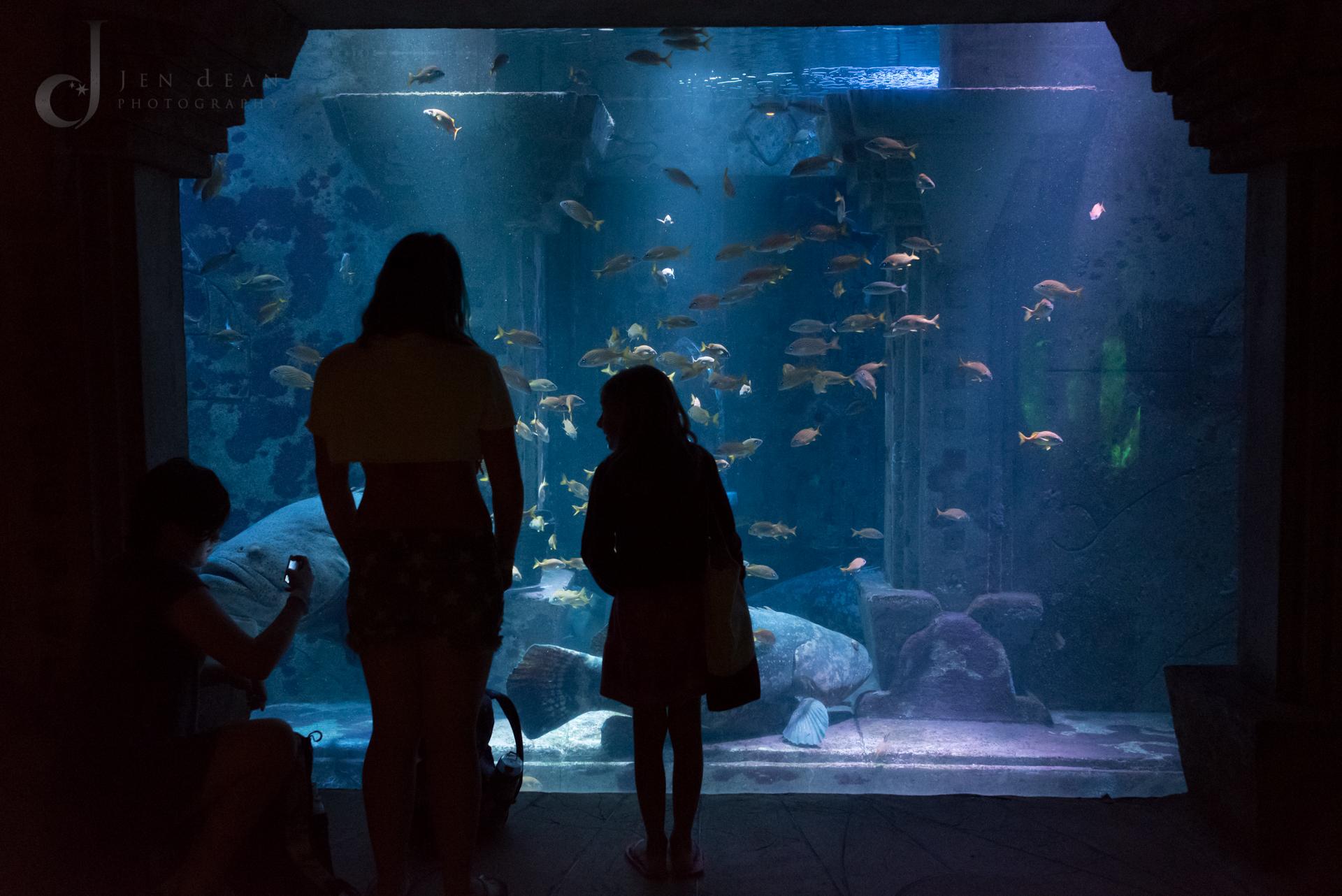 Underground aquarium. Atlantis Resort, Bahamas
