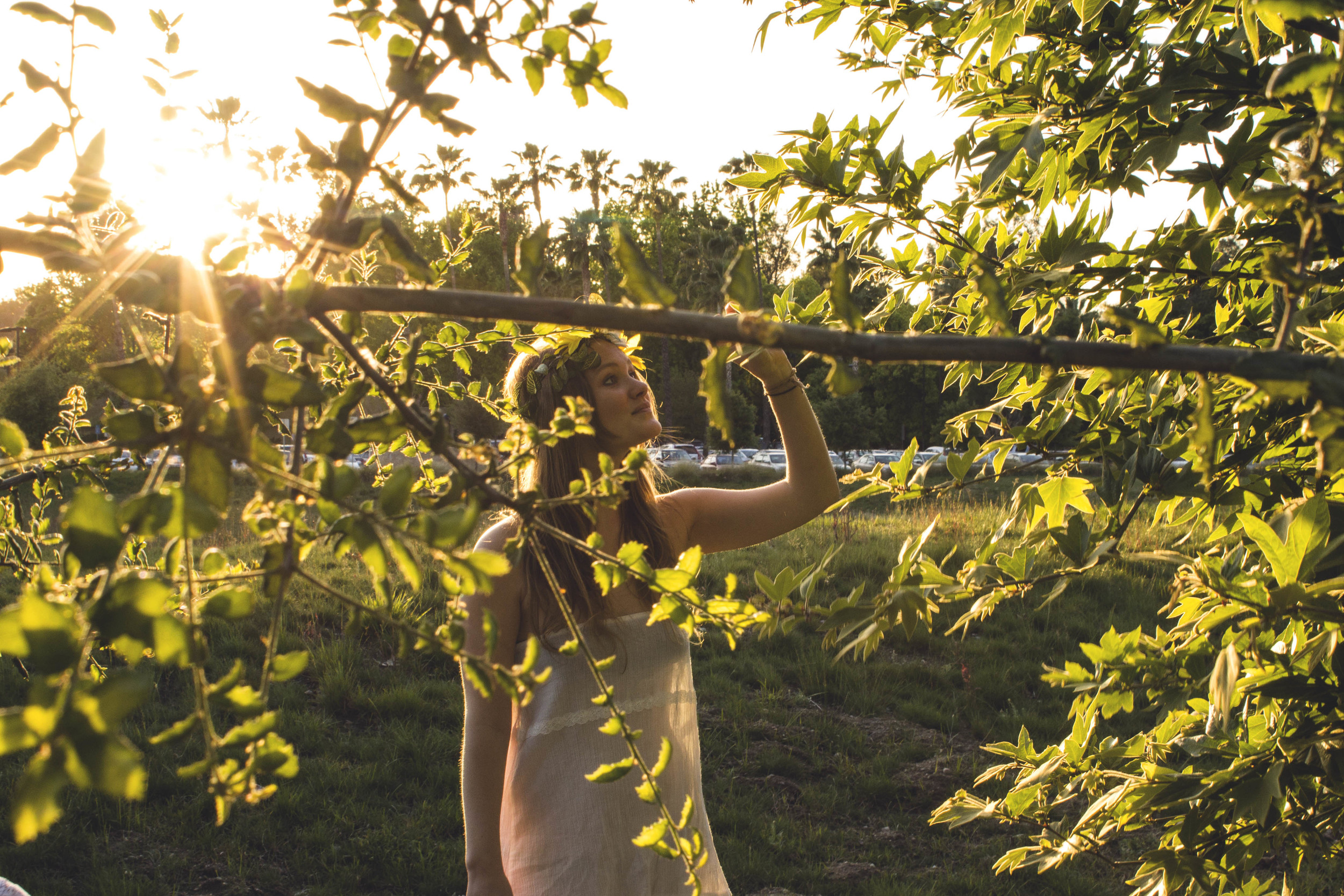 Geo Tree Touch.jpg