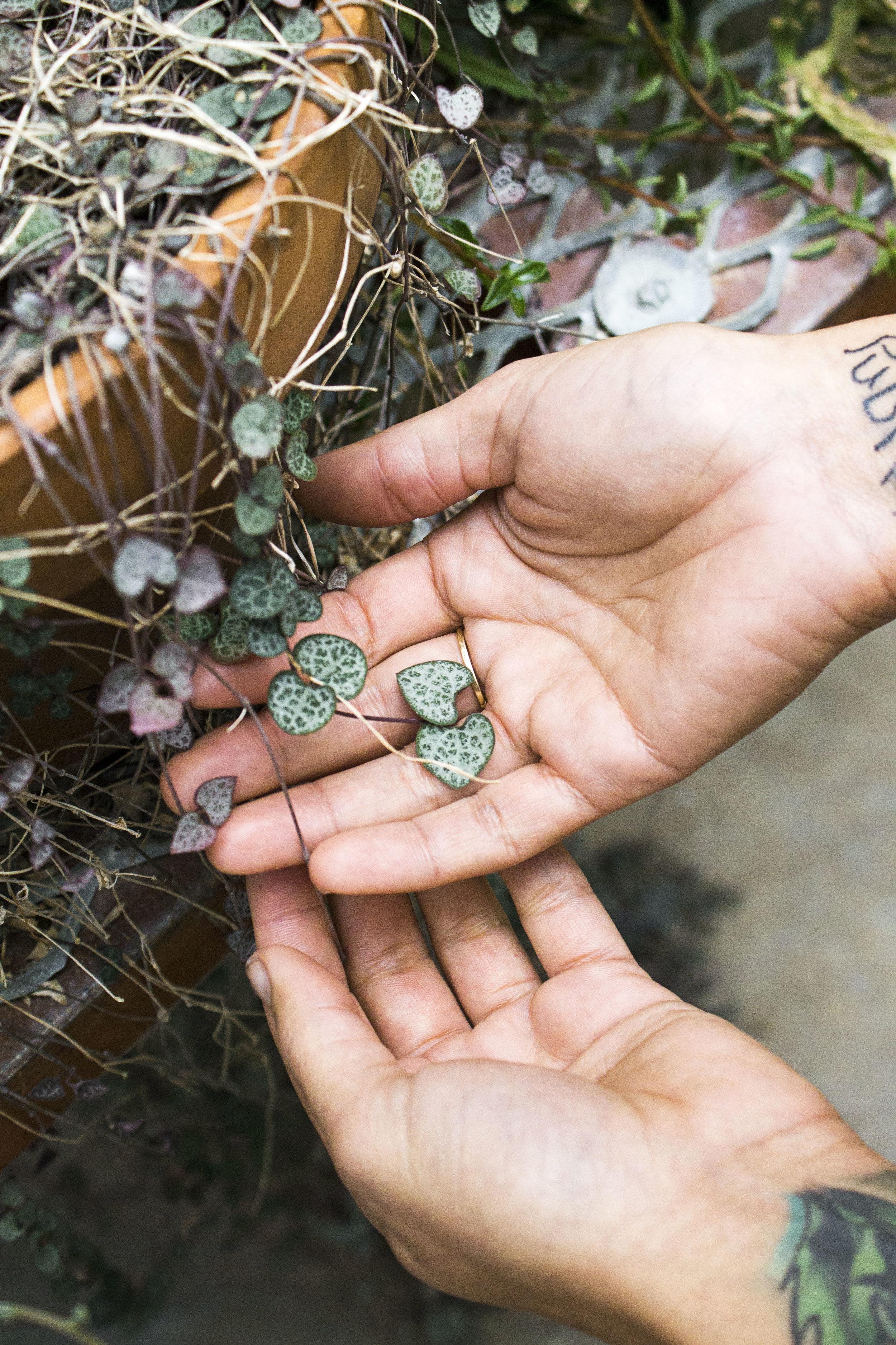 Holding heart plants V.jpg