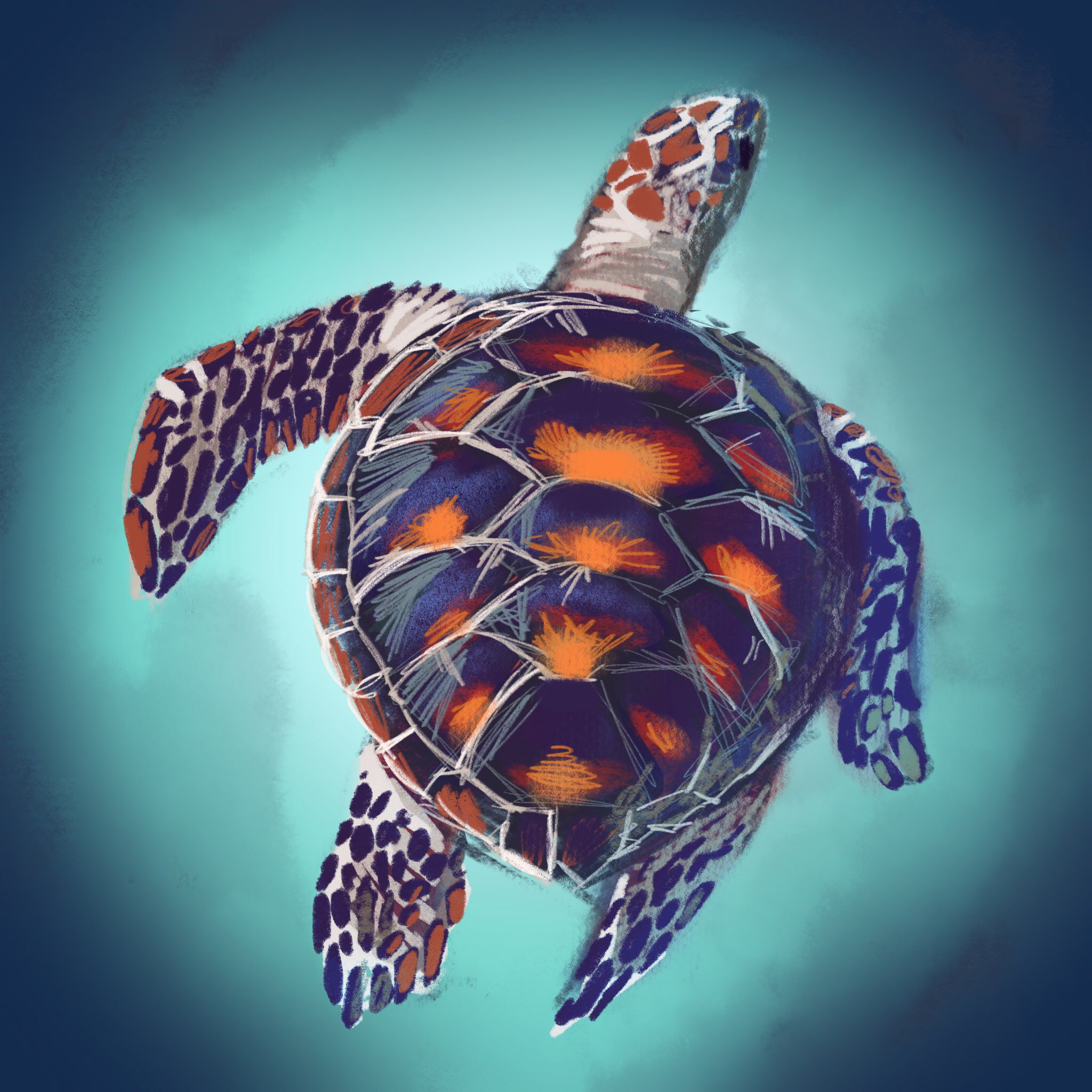 Turtle Study