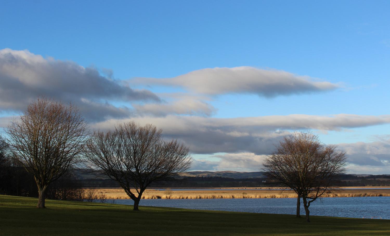 trees and estuary.jpg