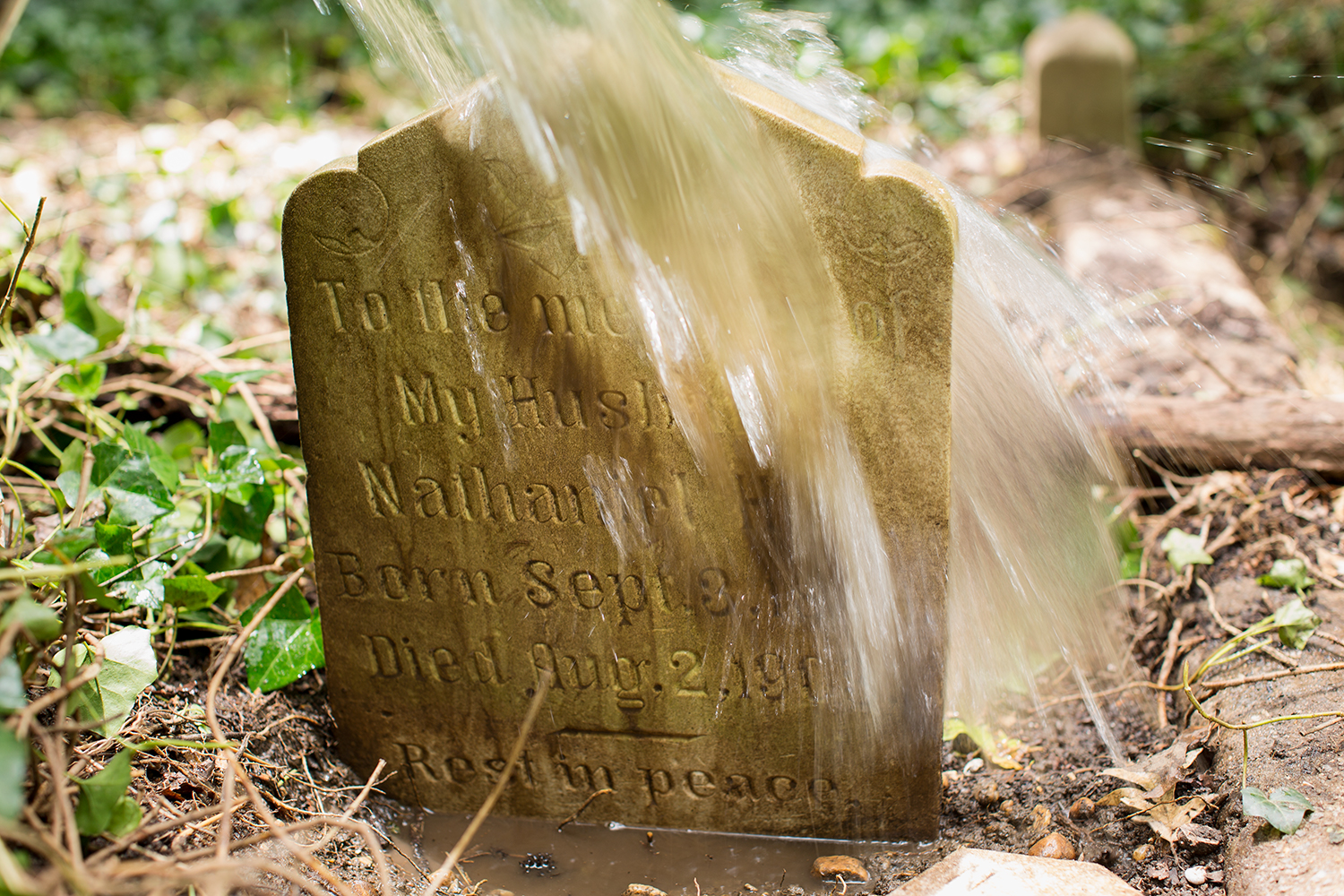 """Headstone of Nathaniel Hill getting rinsed by a volunteer who peeled back decades of overgrown English ivy and brambles. Hill, born circa 1841, filed an application for a Freedman's Bank account in 1871. He is listed as a """"huckster, peddler or vendor,"""" on the 1900 U.S. census."""
