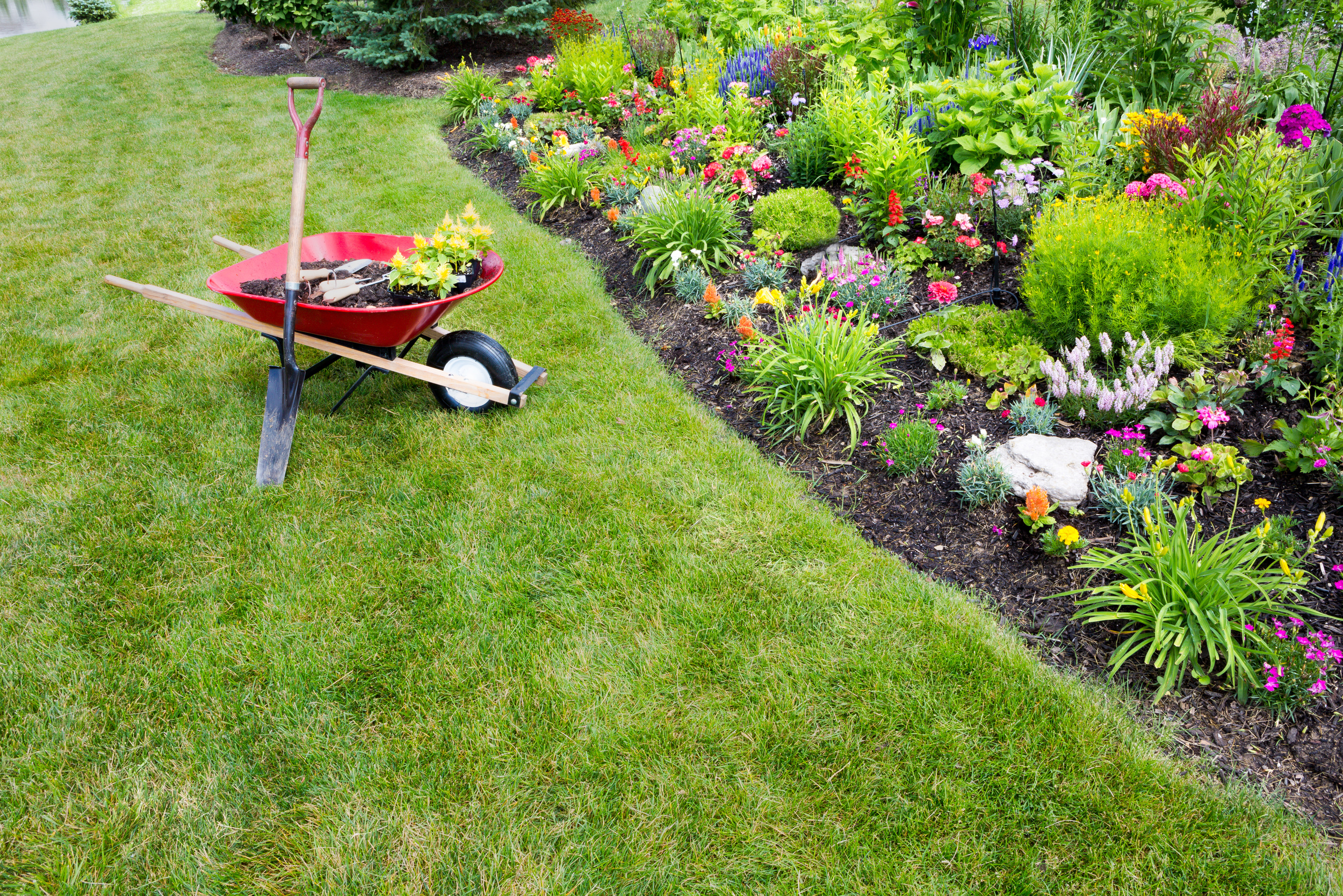 Your Redding Lawn Care Experts    Contact Us